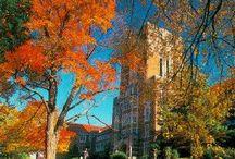 Future Vol! / My dream college, UTK! / by Taylor Stumph
