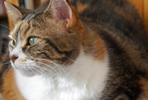 My Favorite Advisor Diva Paws 4 Advice / Diva Paws in a contemporary urban cat living with her human companion.  What is the impact on two very strong personalities? What does Diva teach humans?  Add a little humour and see life unravel.
