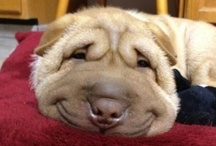 HUMOR/ODDITIES / I love to laugh!