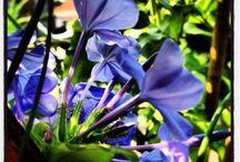 FLOWER DESIGNER... Design di balconi / Balconi da sogno! www.facebook.com/wunderkammerbyme