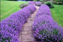 Gardening & Other Outdoor Ideas / by Marnie Hirschey