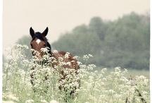 i want a horse / by Megan Pomeroy