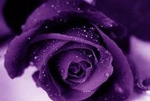 Purple / by Tabitha Stevens