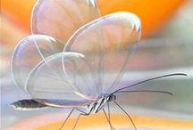 Butterflies and other insects / by Dorene E. Bradley