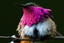BIRDS / by Millain Tuya