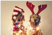Christmas / by Millain Tuya