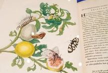 Maria Sibylla Merian / Maria Sibylla Merian (1647–1717) painted and studied insects along with the plants that provided their food and shelter.