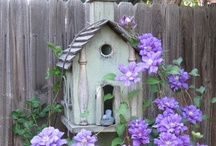 Birds/Birdhouses / by Janine Sak