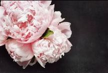 PEONIES / My favourite flowers of all so this board is to indulge me!