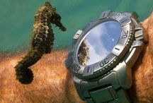 Horology / My love of timepieces...