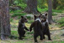 Bears ❤