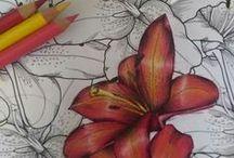 Graphic arts\Графика