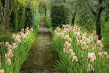 Gardens Edenesque / inspiration / by Brigitte Wurn-Christensen