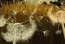 Blow Me A Wish / by Pauli Ranney