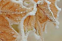 Winter&冬 / by Chihiro Kubota