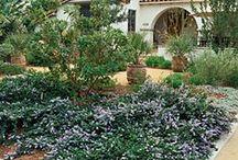 Calif native gardens / by Brigitte Wurn-Christensen