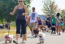 Path to PAWSwalk / Let us help you get ready for PAWSwalk 2014 with healthy tips for keeping fit, ideas for raising funds, and much much more! PAWSwalk 2014 (Sept. 6, King County's Marymoor Park) is one of the most fun fundraisers of the year, and a great way to make a difference to thousands of companion and wild animals being cared for by PAWS in Lynnwood, WA.  www.pawswalk.net  #PAWSwalk2014 / by PAWS Progressive Animal Welfare Society