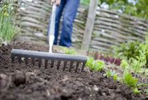 Gardening / Tips and practices to grow your own food and plants. Growing your own food is an economical way to get produce for your family without paying the rising prices of fresh fruits and vegetables. / by STLFoodbank