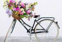 I love Bicycles!