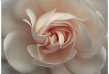 Fleur / by Lin Na | 娜