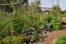 garden inspiration / Nice pictures about gardening