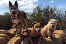 Hiking with Dogs in San Diego County