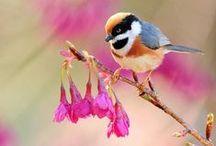 I ♥ Birds