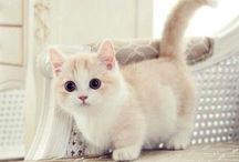 Because Kitties