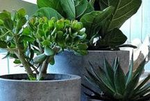 Green plants / by Tiina Mattila