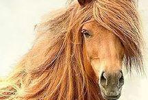 horses / horses / by Betty Walton