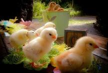Farm Animals / by Teresa Woodside