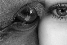 HORSE girl / Horses, horses and more horses.  / by Sorell Long