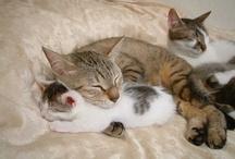 Cat's Meow - Mama/Baby / by Shari Fries