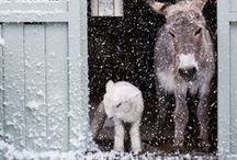 Winter | winter / Kalte, kuschelige Jahreszeit! Schnee, Winterlandschaften, verschneite Häuser, putzige Tiere, Stille.