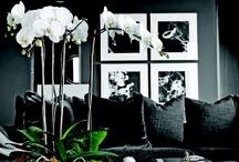 Home | Living Room / by Merisa Voorhies