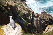 Galicia: Rías Baixas e Islas Atlánticas / Oferta especial de Busco Un Chollo: 3 días y 2 noches en el Hotel Oca Vermar 3* (Sanxenxo-Galicia) con 2 desayunos + detalle de bienvenida (bombones) + 1 billete de barco a la Isla de Ons (Parque Nacional Islas Atlánticas) + Picnic tradicional gallego para la excursión a la Isla de Ons + Wi-Fi en la habitación y zonas comunes del alojamiento + parquing (exterior). ¡Todo un chollo de viaje! / by Busco Un Chollo