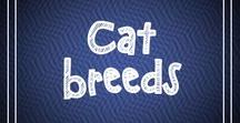 Cat Breeds / This board is all about cat breeds. Here you can find the smallest cat breeds, the largest cat breeds and other information regarding different cat breeds.