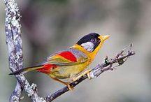 Birds / by Debbie Stevens Heazle