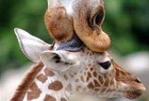 Animal Love / by Debbie Stevens Heazle