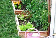 Gardening / by Vicetta Utley