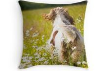 """ITALIAN SPINONE THROW PILLOWS / Lots of square THROW PILLOW sizes available from 14"""" x 14"""" to 26"""" x 26"""" via Either REDBUBBLE OR FINE ART AMERICA. Rectangular Throw Pillows are avail via FINE ART AMERICA 20"""" x 14""""  with a choice of either horizontal or vertical format. Available with or without 100% recycled polyester fibre insert Concealed zipper for aesthetic wonderment Selected design printed on both sides"""