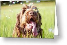 GREETING CARDS - ITALIAN SPINONE / Greeting cards are available via Redbubble or Fine Art America http://www.redbubble.com/people/heidiannemorris   http://fineartamerica.com/profiles/heidiannemorris/shop