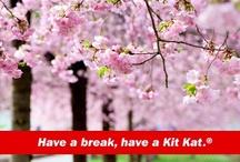 3月 桜 sakura / 春を彩る桜いろいろ ♪