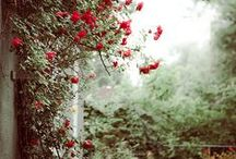 Garden / by Thriftin Lady