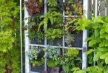 Gardening Top Tips / Top tips for gardeners and for the greenhouse