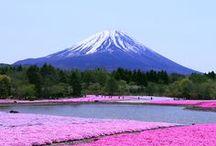 8月ボード 富士山 / 8月ボードのテーマは世界遺産登録、富士山 Mt.Fujiです。