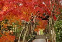 11月ボード 京都の紅葉 / 11月ボードです。今回のテーマは、京都の紅葉です。京都のすばらしい紅葉をご紹介しております。