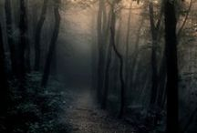 Whose Woods These Are..... / forests