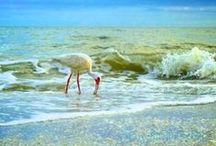 Sanibel Birds