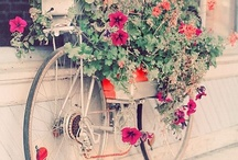 Cycle Flower Power